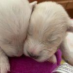 Roxanne & Angus Pups