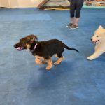 Before puppy class